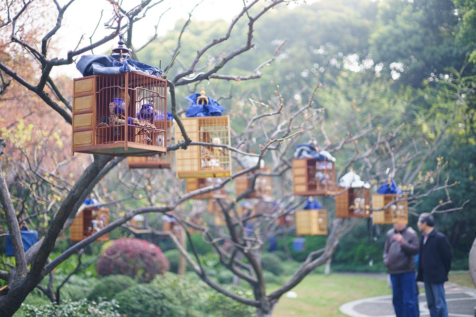 Bird House: The Resting Place for Soul